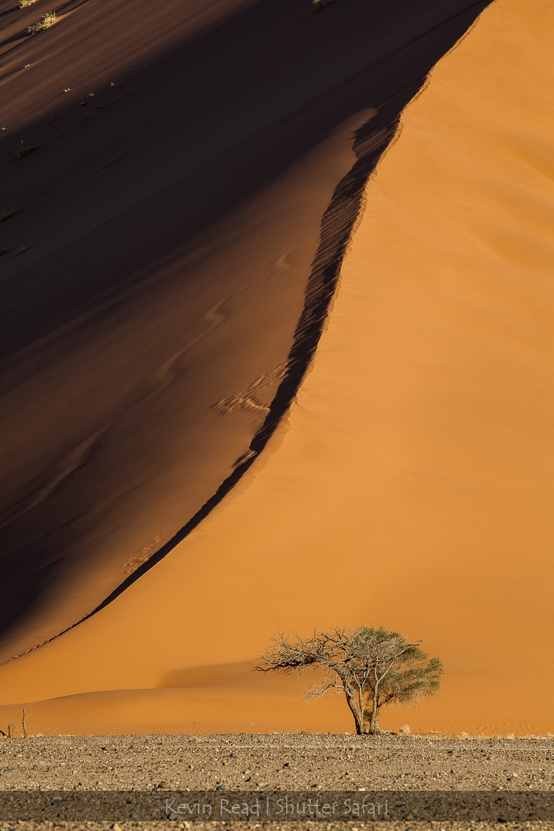 Dune and a Tree
