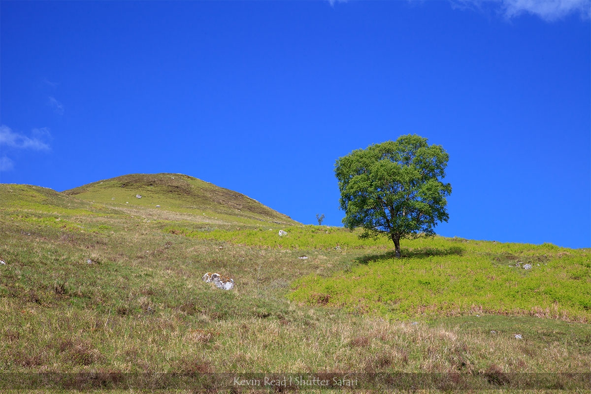 scotland_lonetree.blog.1200